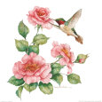 Carolyn Shores-Wright - Ruby Throated Humingbird w Roses II